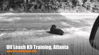 Holding Position Even While Driving Away! | Dog Training Atlanta