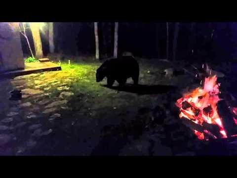 Bear in camp
