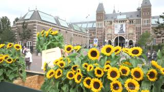 Labyrint of sunflowers Van Gogh Museum Amsterdam
