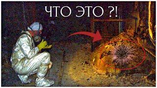 Кто ЖИВЁТ  под ЧЕРНОБЫЛЬСКИМ саркофагом ?