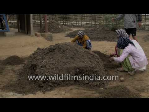 Earthworm casting or vemi-composting to make organic fertiliser in India