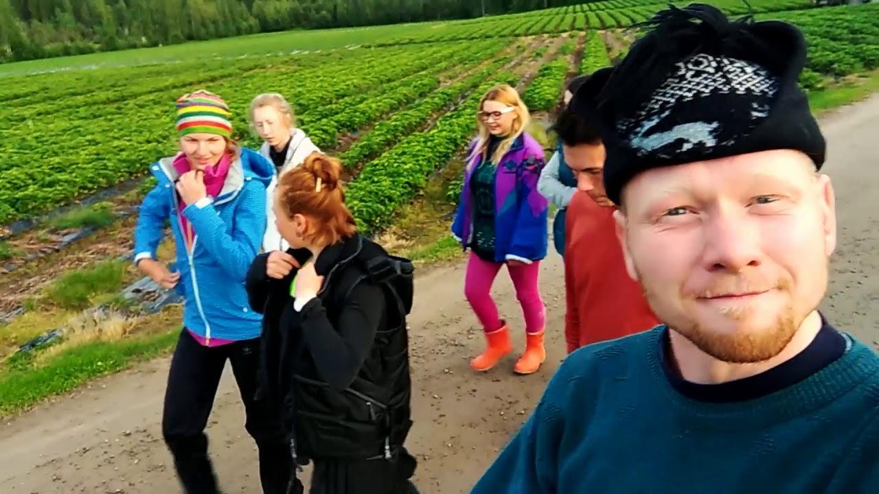 Работа в Финляндии на сборе клубники 2017. Часть 2. Секрет бюджетного путешествия