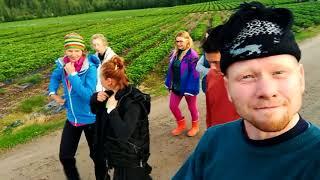 Работа в Финляндии на сборе клубники 2017 Часть 2 Секрет бюджетного путешествия