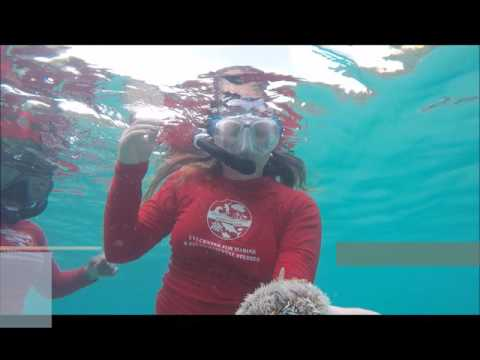 Youth Ocean Explorers Program - Summer 2016 - Week #1