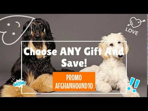 Afghan Hound Gift Selection From Pawick