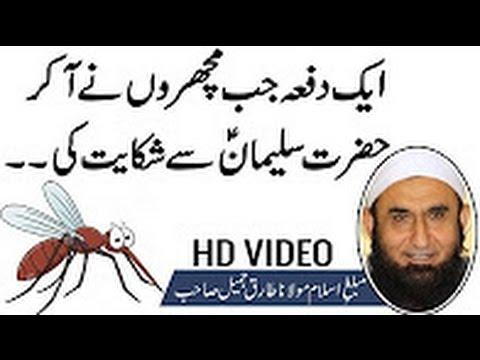 Maulana Tariq Jameel 2017   Islamic Bayan   Urdu Bayan   Solomon Sulaiman AS & Mosquito Machhar
