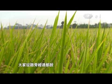 【農夫與他的田 預告】20130928 竹塘種好米