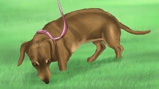 видео Как приучить щенка к выгулу на улице?