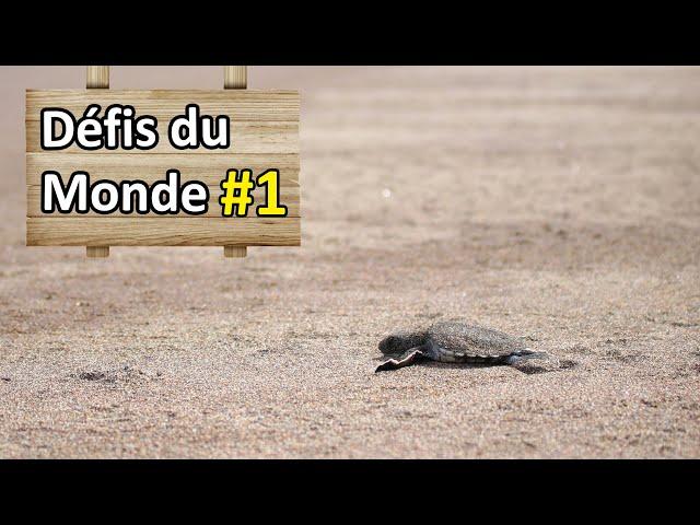 Voir des bébés tortues rejoindre la mer - Défi #1 - Nomades 2.0