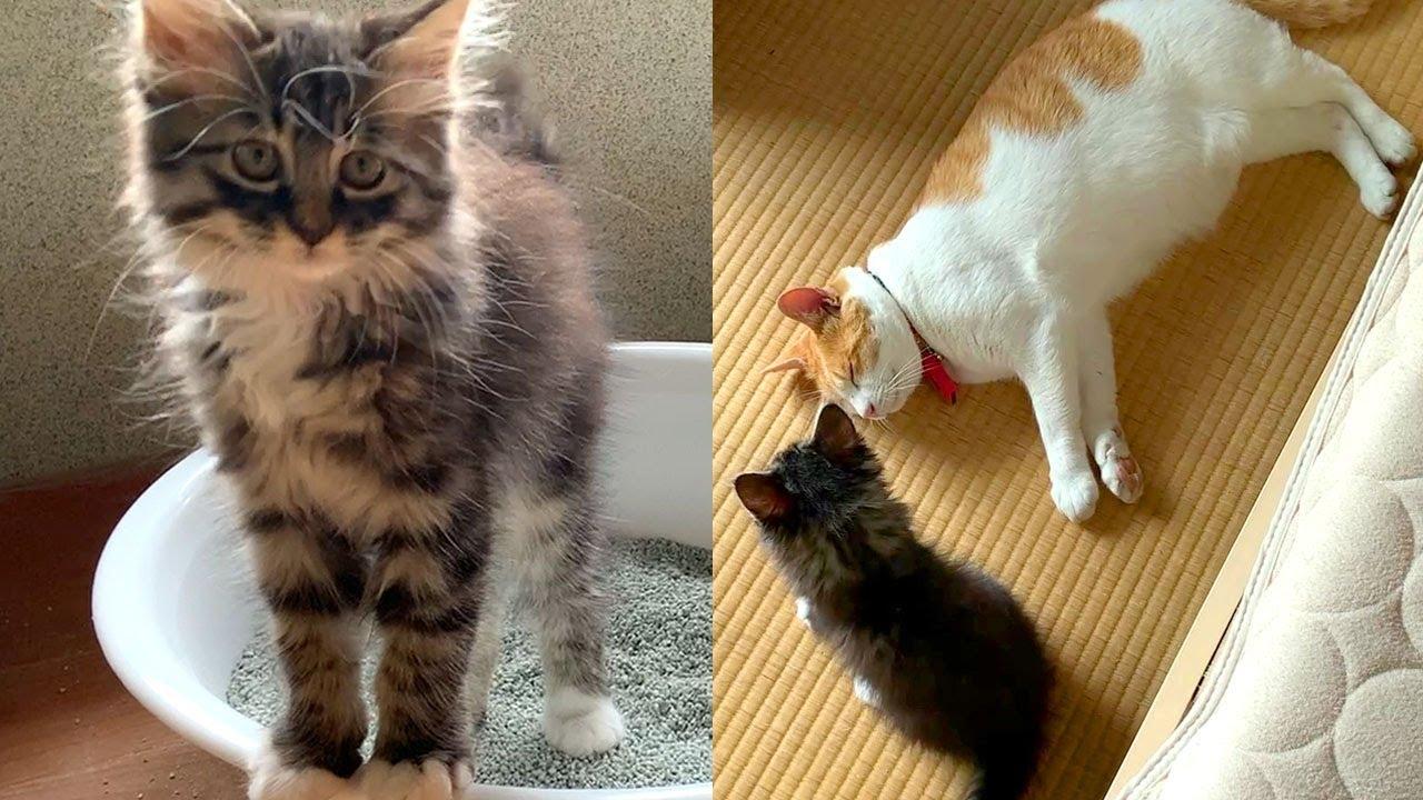 自由な長毛子猫と優しい先住猫