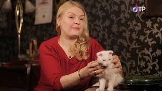 Украинский левкой. Передача Домашние животные. Часть 1