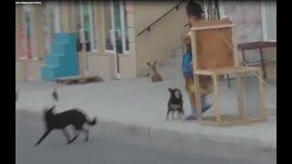 Продавщица мешает поймать бездомную собаку