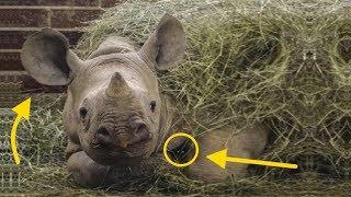 Как отважные кошки подружились с носорогами (размер не имеет значения)
