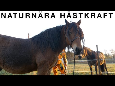 Working With North Swedish Drafting Horses | S1 • E2 | Great