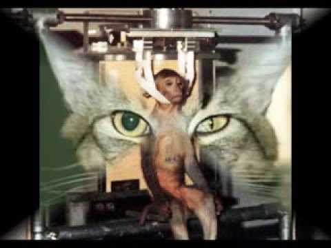 animal testing yes or no
