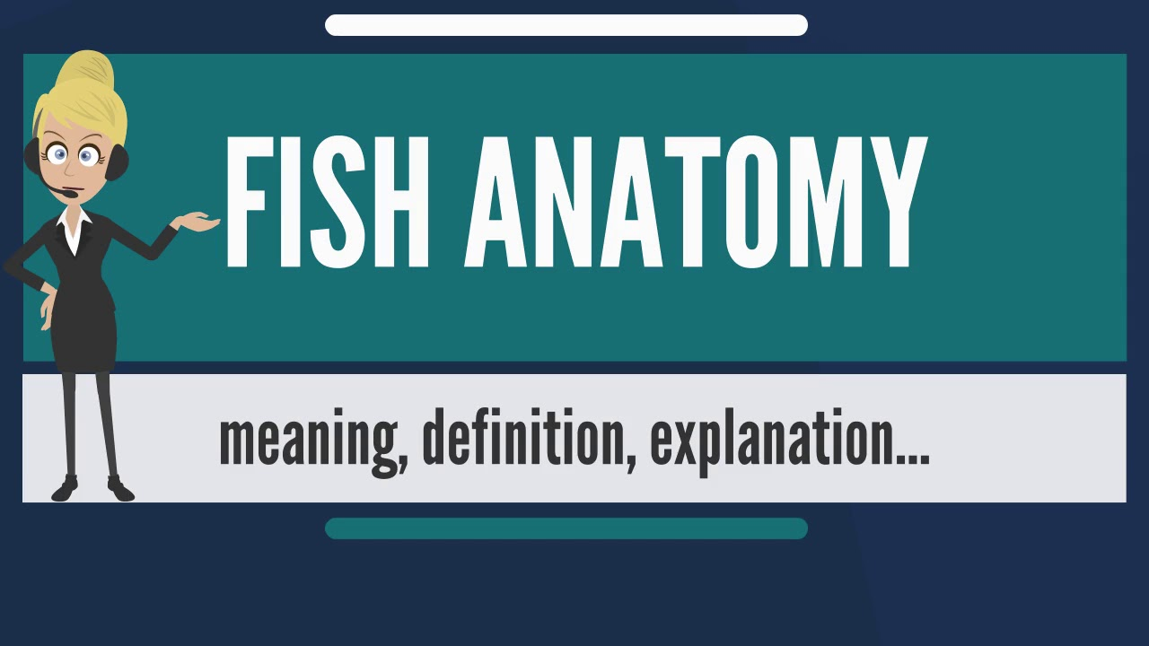 What is FISH ANATOMY? What does FISH ANATOMY mean? FISH ANATOMY ...