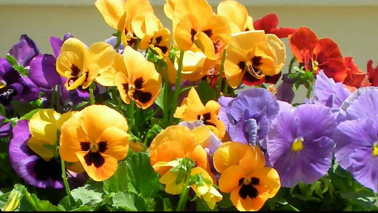 W.A. Mozart Serenade K.V. 525 Romanze (andante)* Musique et fleurs de printemps III - YouTube