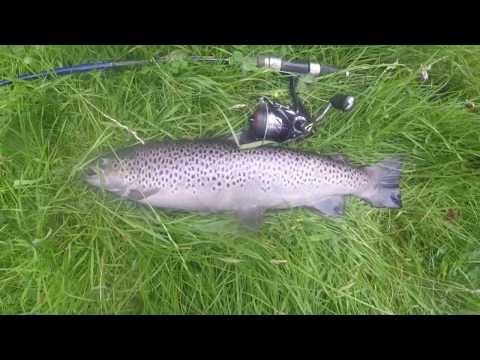 Spinning On A Small Spate River. Salmon & Sea Trout