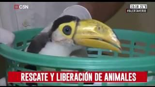 Temaikèn - Alerta Verde: Rescate animal