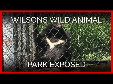 Wilsons Wild Animal Park