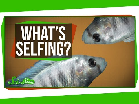 What is Selfing?
