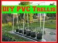 DIY PVC Trellis System for My Hybrid RGGS - 6/15/16