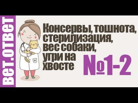 Стафилококк симптомы, лечение - Болезни на