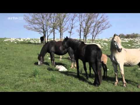 Von Pferden und Wölfen