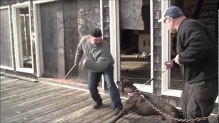 Man /dog Team Security Training...