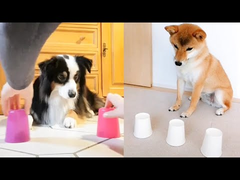 Funny Dogs and Cats Reaction to Magic Tricks