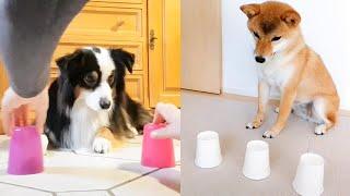 Dog and Cat Reaction to Magic Trick - Funny Dog u0026 Cat With Magic Tricks