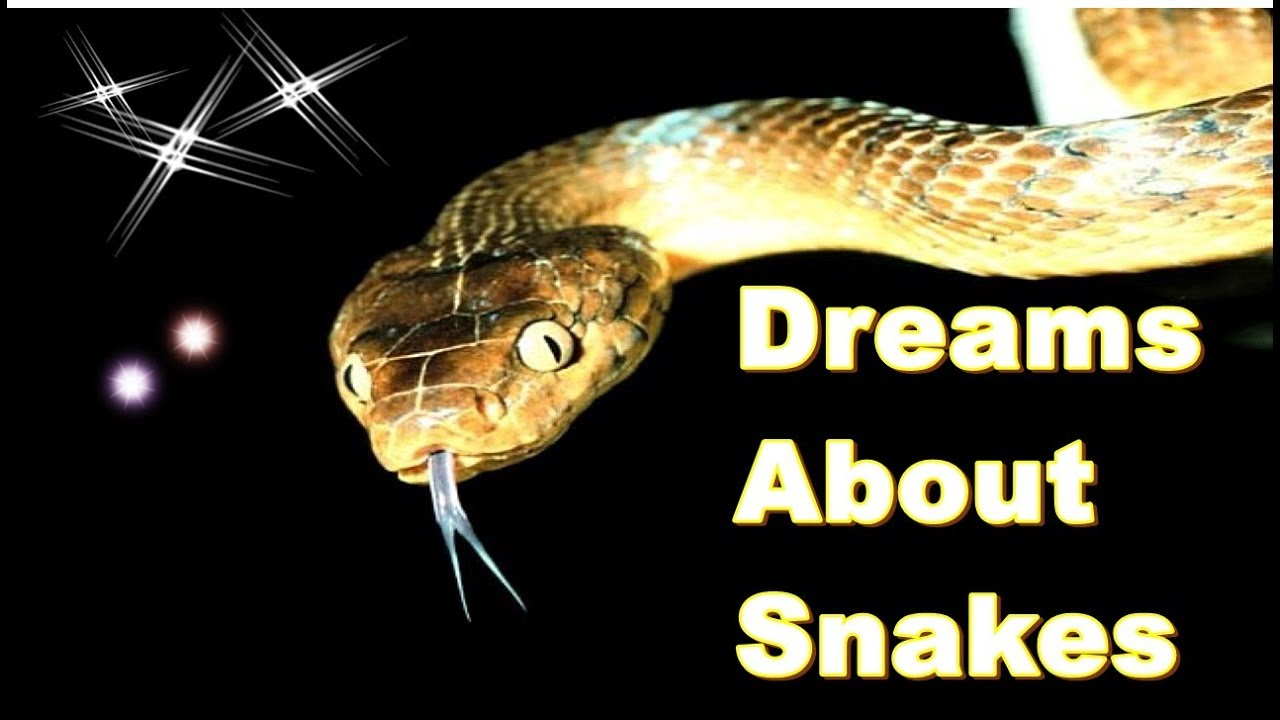 what it means to dream about snakes