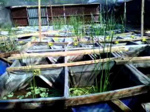 Betta Farm di Jakarta Timur  YouTube