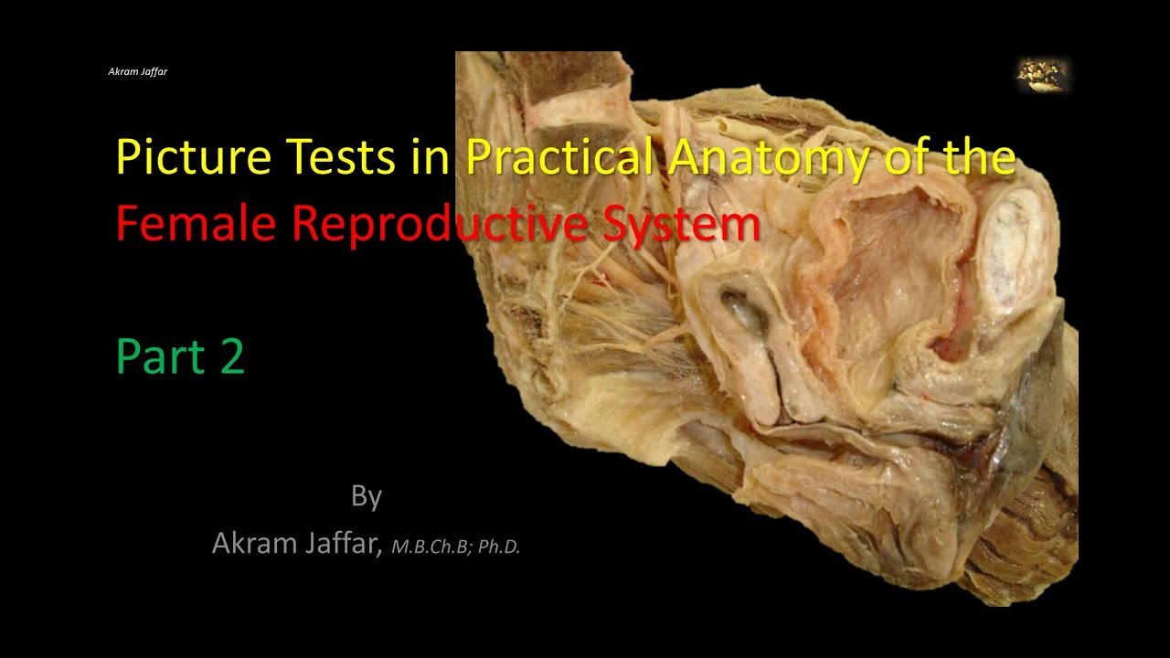 Picture tests in the anatomy of the female reproductive system 2 ...