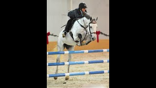 "Cappa Irish Charmer - ""A"" 1.05m Jumpers - Imported, Approved Irish Draught Stallion at Stud"