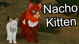 Nacho Kitten | Roblox [BETA] Warrior Cats: Ultimate Edition