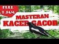 Masteran Kacer Full Isian Jernih Dan Pancingan Bunyi Gacor Bikin Jago Anda Ngobra Part 1 Ngalas(.mp3 .mp4) Mp3 - Mp4 Download