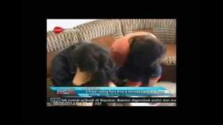 Download Video [ANTV] TOPIK 6 Pelajar Digerebek Sedang Pesta Sex MP3 3GP MP4