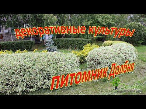 Зимостойкие декоративные культуры.