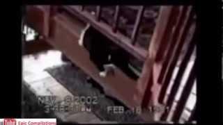 Прикольные кошки 5. Epic Funny Cats - Cute Cats Compilation!