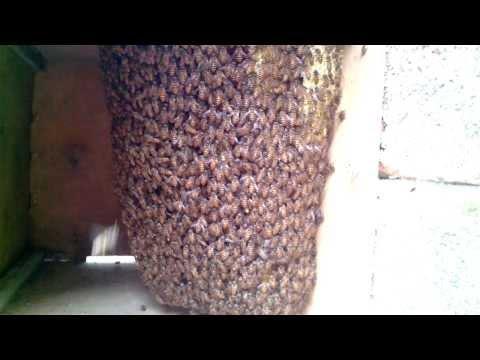 Nuôi ong ruồi