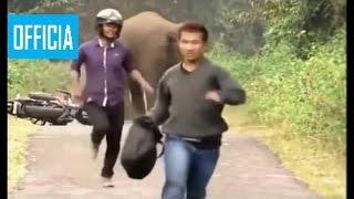 Самое Удивительное Нападения Диких Животных Слон Атакует Человека, Льва, Гиены, Крок