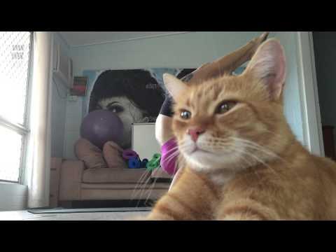stara zrela crna maca besplatni domaći milf sex videa