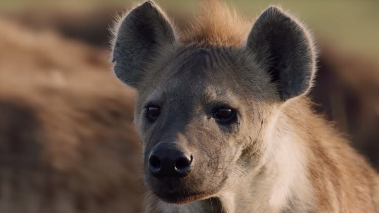 Dynasties | New Series | BBC Earth | BBC Earth