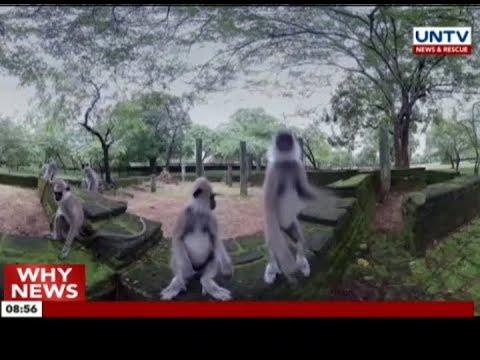 Paris lays on virtual reality adventure to save wildlife