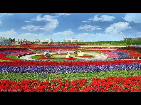 Dubai Miracle Garden 2018 || Largest Flower Garden in the World