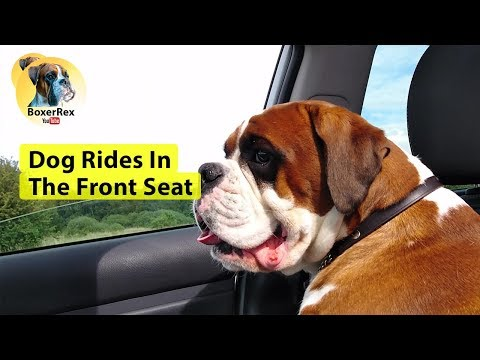 Dog Rides In The Front Seat 👍 😁
