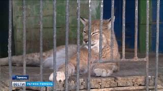 Более 60 сайтов по продаже диковинных животных прикрыли благодаря тюменским прокурорам