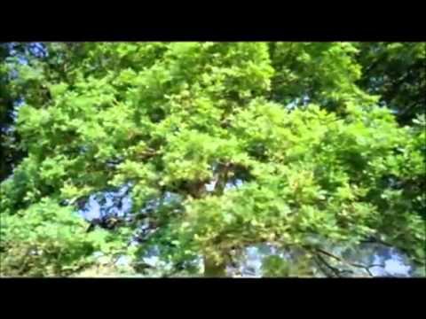 Atmosphere (Video) – Frenkie B.