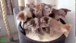 смешные кошки 2014 г